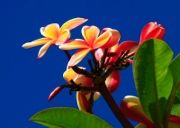 Oahu_0707018.jpg